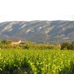 De Rhône , een prachtig wijngebied